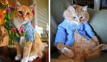 18 gatos que encontraron las chaquetas de punto que necesitaban para ser aún más lindos.