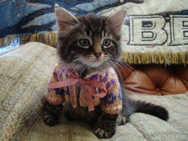 gatos-chaqueta-punto-clase1