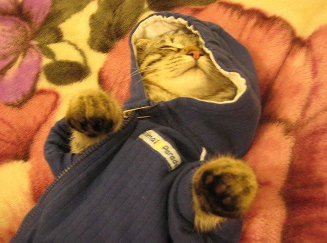 gatos-chaqueta-punto-clase11