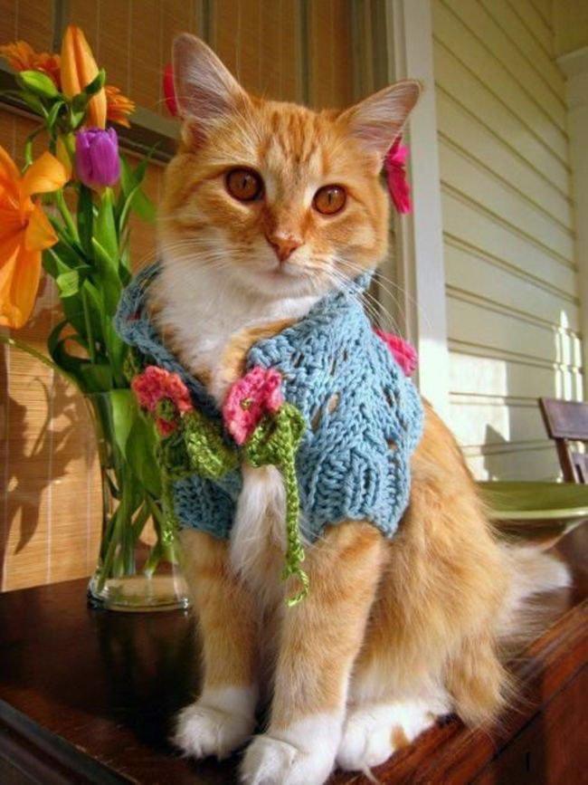 gatos-chaqueta-punto-clase12