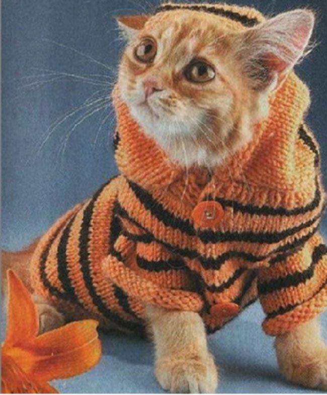 gatos-chaqueta-punto-clase13