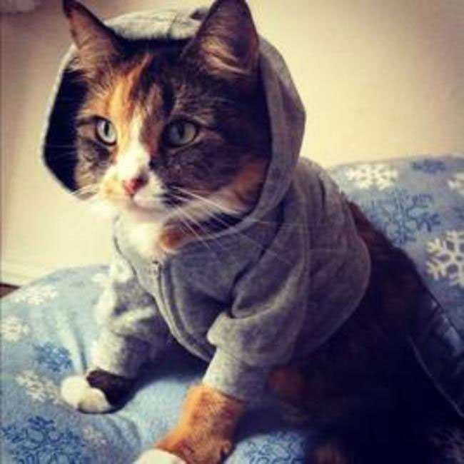 gatos-chaqueta-punto-clase14