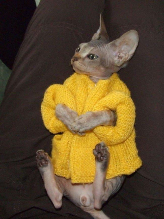 gatos-chaqueta-punto-clase15