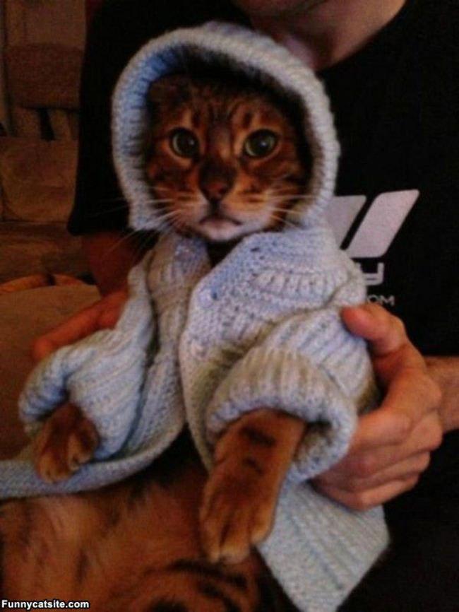 gatos-chaqueta-punto-clase16