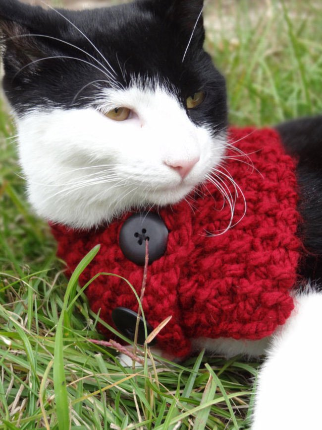 gatos-chaqueta-punto-clase17
