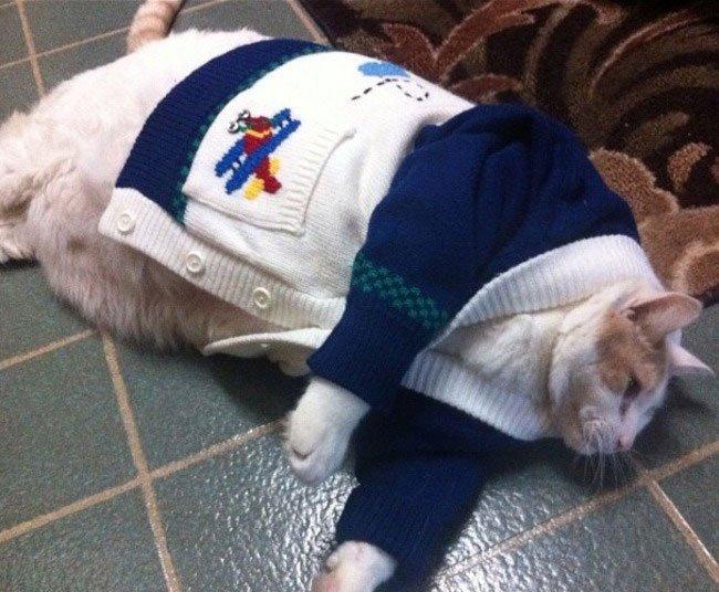 gatos-chaqueta-punto-clase2