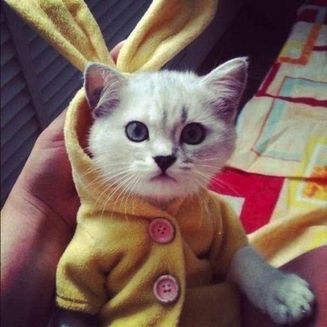 gatos-chaqueta-punto-clase3