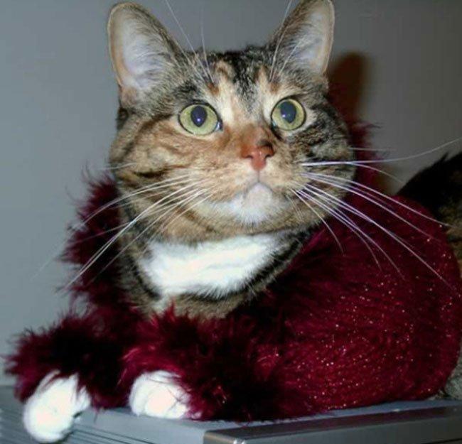 gatos-chaqueta-punto-clase4