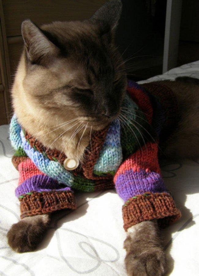 gatos-chaqueta-punto-clase5