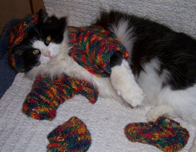 gatos-chaqueta-punto-clase6