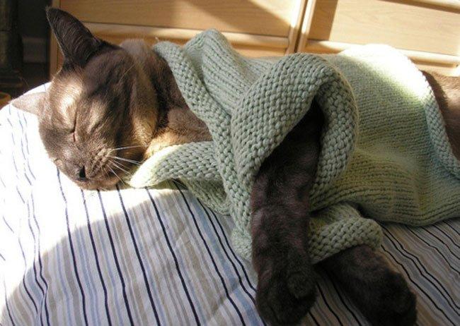 gatos-chaqueta-punto-clase7