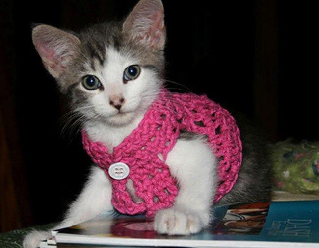 gatos-chaqueta-punto-clase8