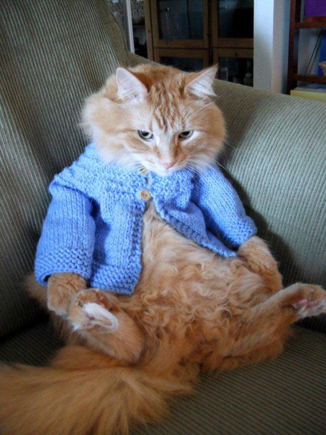 gatos-chaqueta-punto-clase9