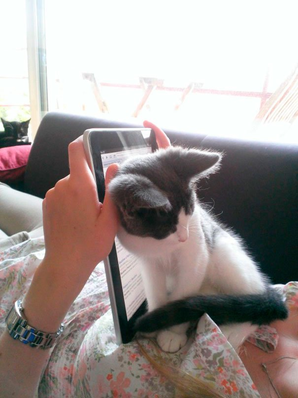 gatos-no-dejan-leer-10