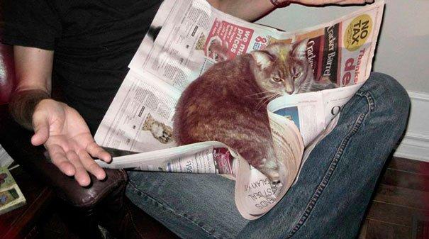 gatos-no-dejan-leer-12