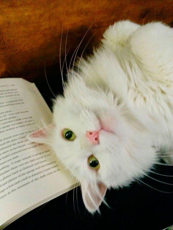gatos-no-dejan-leer-14