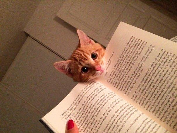 gatos-no-dejan-leer-2