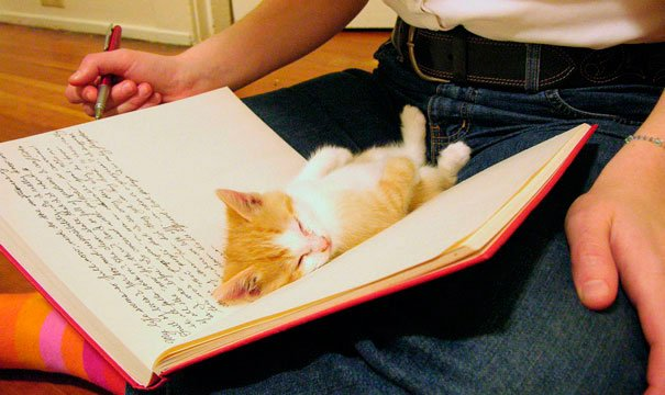 gatos-no-dejan-leer-3