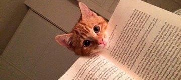 15 Gatos que necesitan toda tu atención justo cuando empiezas a leer.