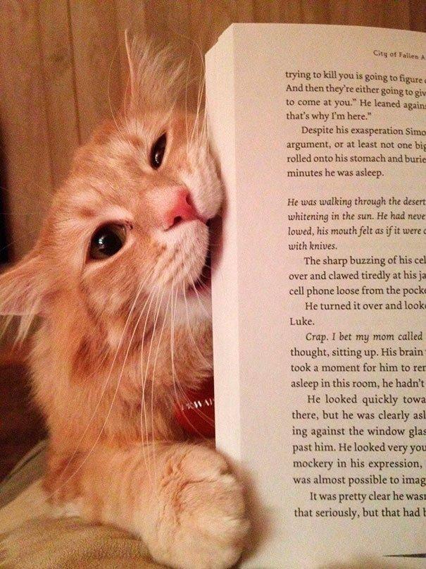 gatos-no-dejan-leer-5