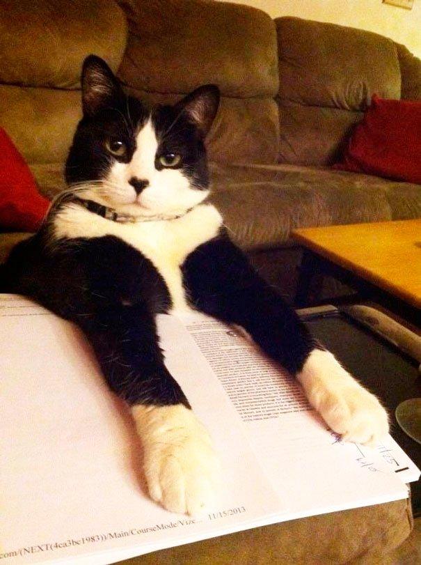 gatos-no-dejan-leer-7
