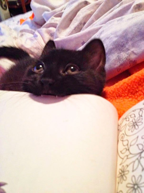 gatos-no-dejan-leer-8