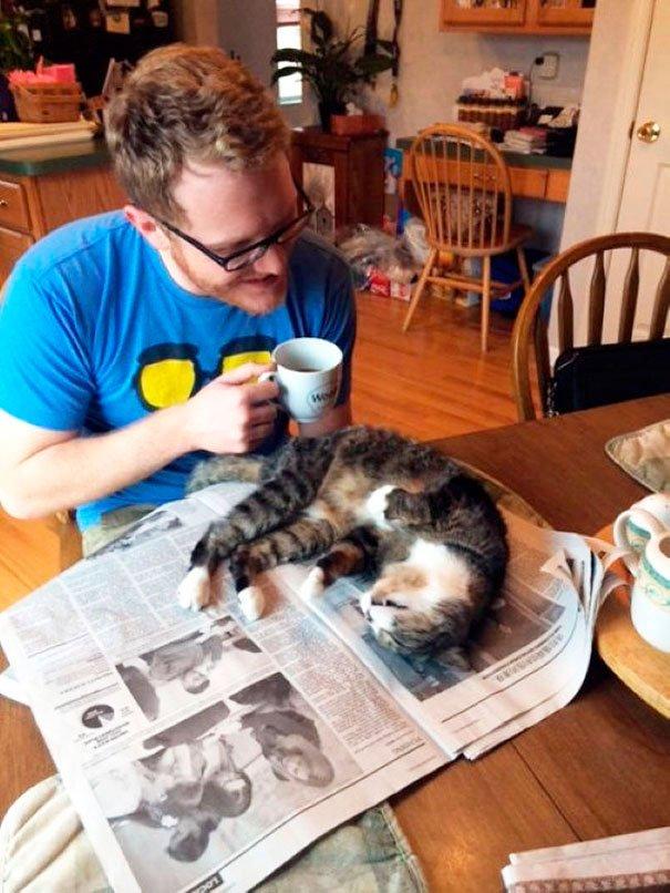gatos-no-dejan-leer-9