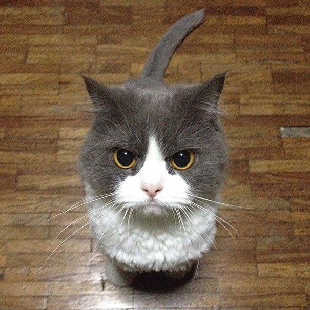 gatos-planeando-matarte13