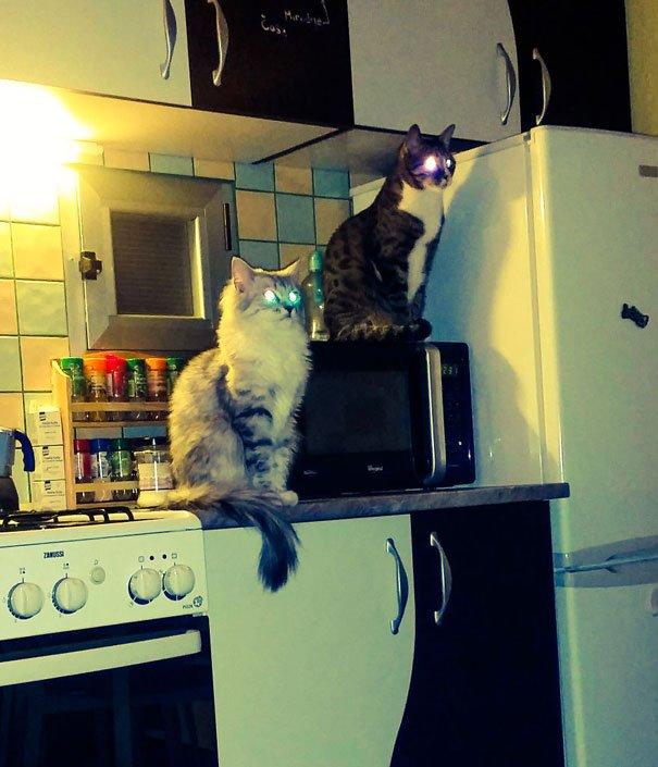 gatos-planeando-matarte22
