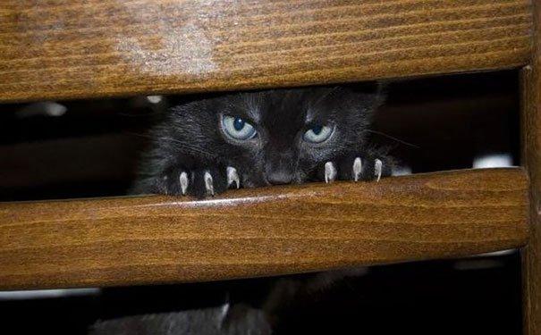 gatos-planeando-matarte6