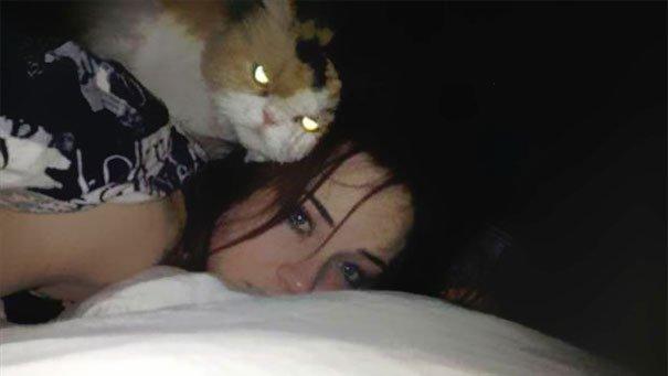 gatos-planeando-matarte9