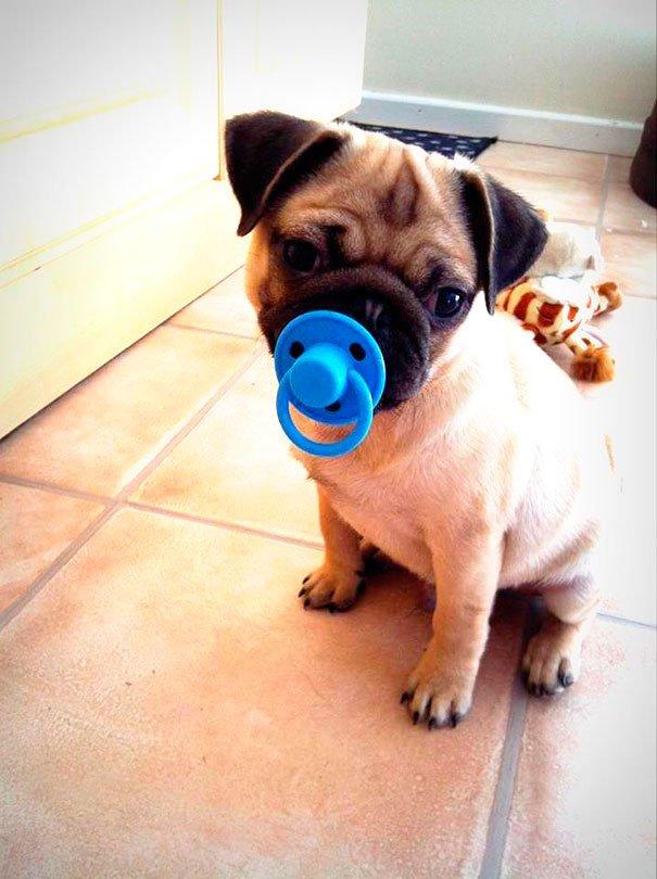 juguetes-graciosos-perros-11