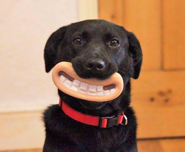 juguetes-graciosos-perros-2