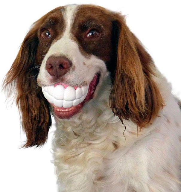juguetes-graciosos-perros-5
