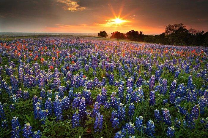 paisajes-coloridos-primavera11