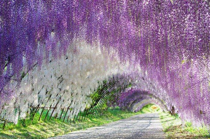 paisajes-coloridos-primavera13