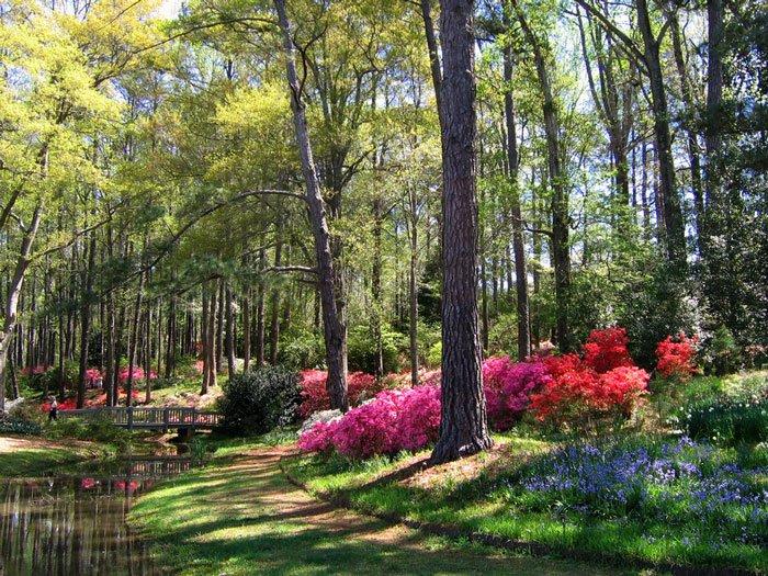 paisajes-coloridos-primavera18