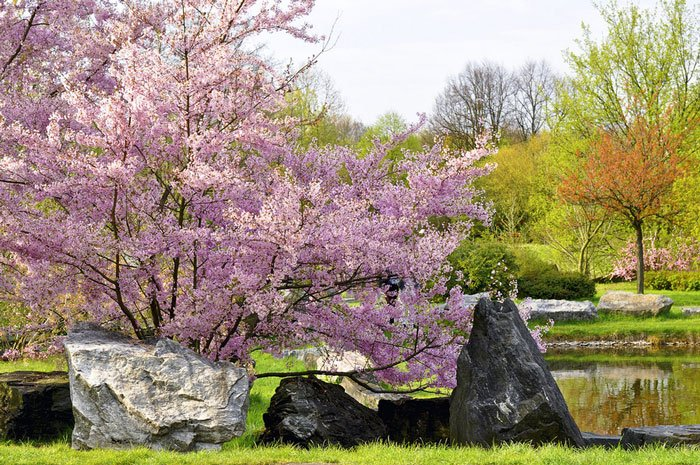 paisajes-coloridos-primavera21