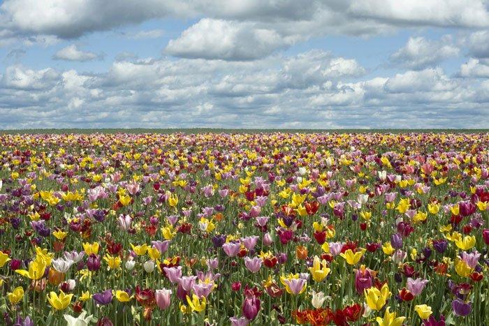 paisajes-coloridos-primavera3
