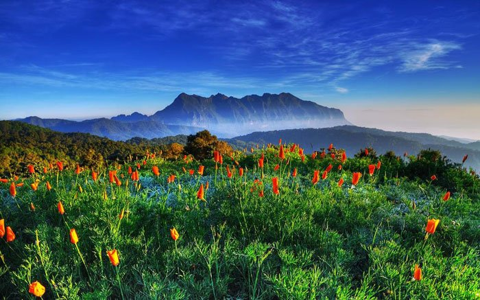 paisajes-coloridos-primavera4