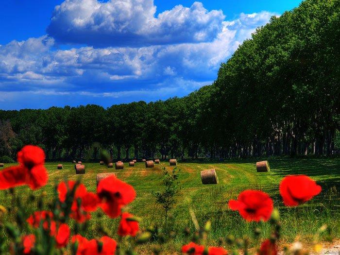 paisajes-coloridos-primavera6