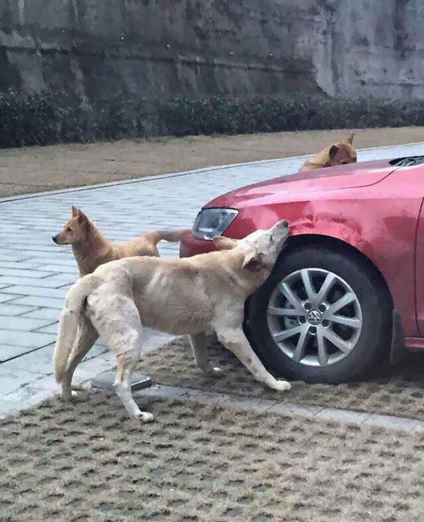 perro-callejero-venganza-china1