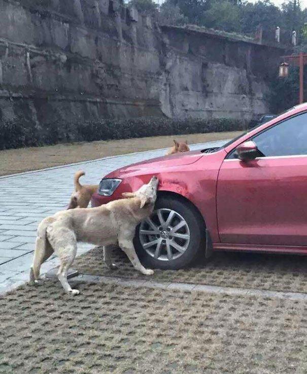 perro-callejero-venganza-china2
