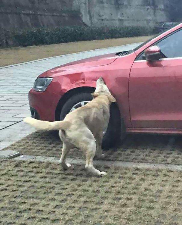 perro-callejero-venganza-china4