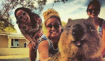 Los selfies junto a un adorable Quokka es la última tendencia en Australia.