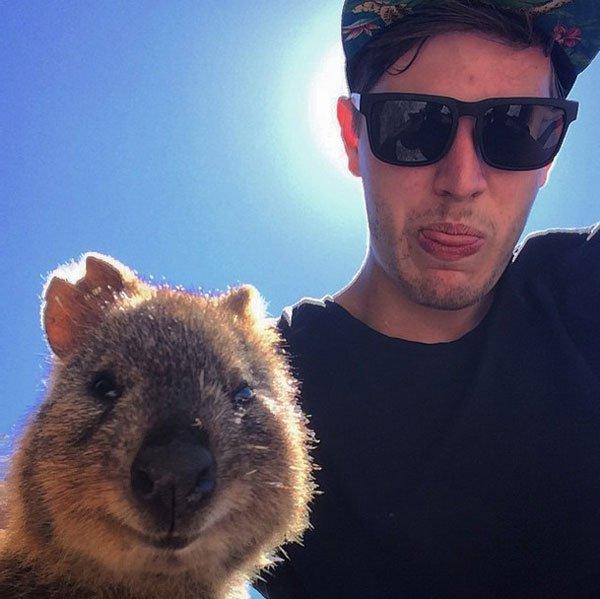selfies-quokka10