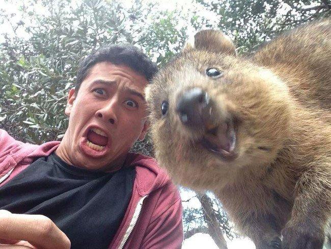 selfies-quokka17