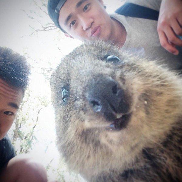 selfies-quokka5