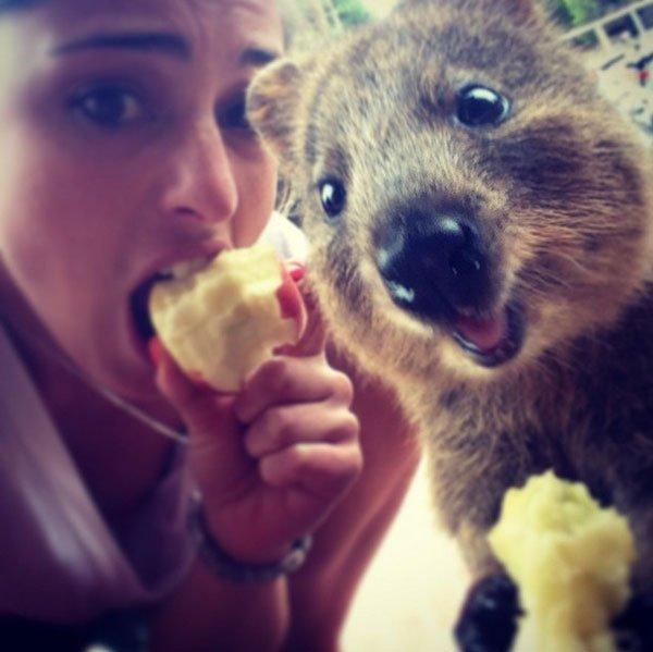 selfies-quokka7