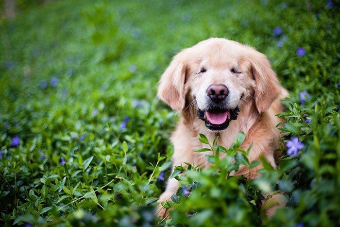 smiley-perro-terapia-ciego1